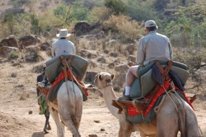 The Lead Camels